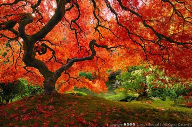 Doğadan mucizevi ağaçlar! - Page 4
