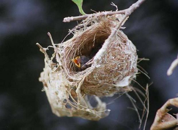 Doğuştan mimar olan kuşların şaheserleri - Page 3