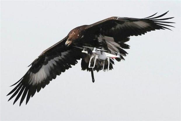 Drone avlaması için Kartallar eğitiliyor! - Page 2