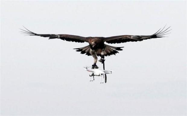 Drone avlaması için Kartallar eğitiliyor! - Page 3