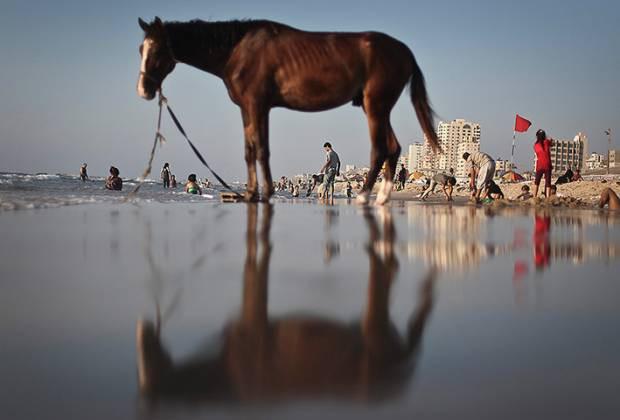 Dünyadan günün en etkileyici fotoğrafları! 13 Ağustos - Page 1