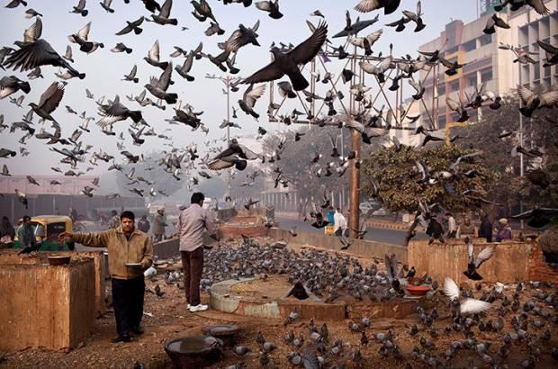 Dünyadan günün en etkileyici fotoğrafları! 27 Aralık - Page 1