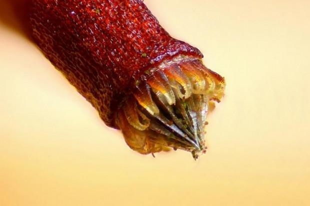 Dünyamızın mikroskobik güzelliği - Page 2