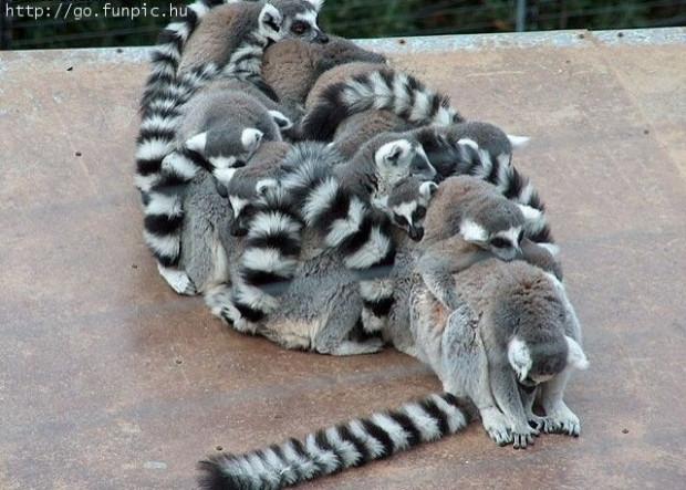 Dünyanın bilimsel olarak kanıtlanmış uykuyu en çok seven 10 hayvanı! - Page 4