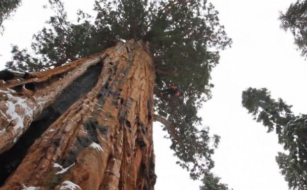 Dünyanın en büyük ağacı - Page 1