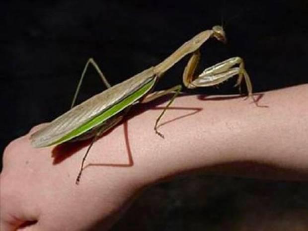 Dünyanın en büyük böcekleri - Page 1
