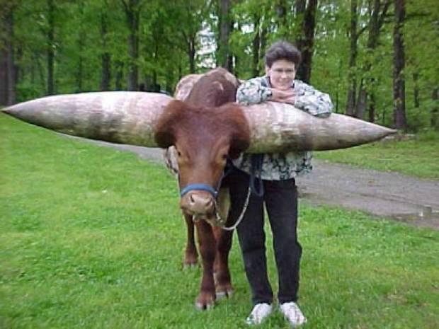 Dünyanın en büyük inek resimleri! - Page 4