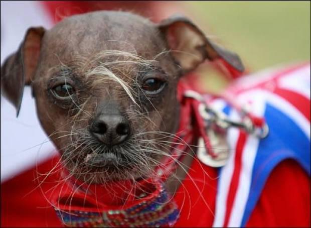 Dünyanın en çirkin köpekleri! - Page 1