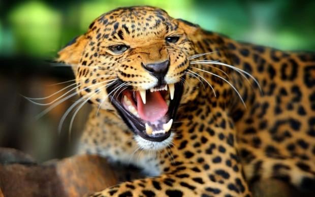 Dünyanın en güçlü çeneli hayvanları! - Page 1
