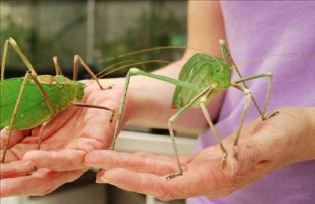 Dünyanın en korkunç böcekleri! - Page 2