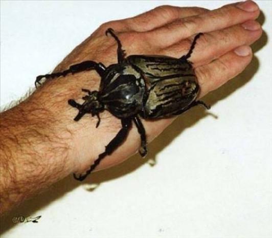 Dünyanın en korkunç böcekleri! - Page 3