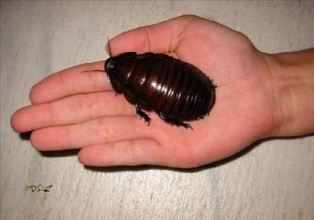 Dünyanın en korkunç böcekleri! - Page 4