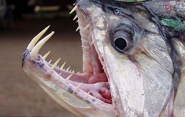 Dünyanın en ölümcül canlıları,katil hayvanlar! - Page 3