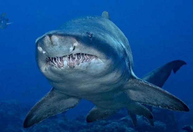 Dünyanın en tehlikeli 7 köpekbalığı - Page 1