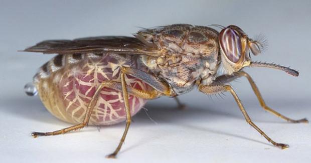 Dünyanın en tehlikeli, ölüm saçan böcekleri - Page 1
