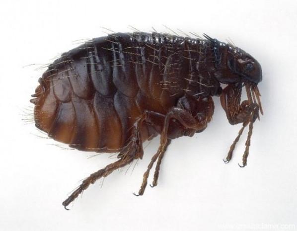 Dünyanın en tehlikeli, ölüm saçan böcekleri - Page 3