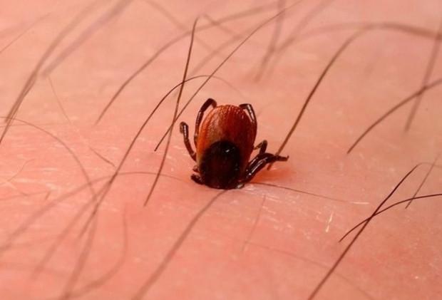 Dünyanın en tehlikeli, ölüm saçan böcekleri - Page 4