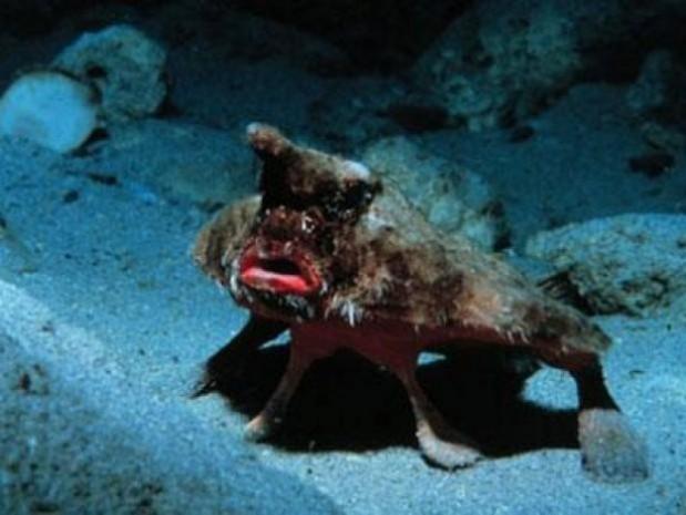 Dünyanın en tuhaf deniz canlıları - Page 1