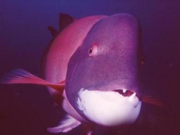 Dünyanın en tuhaf deniz canlıları - Page 3