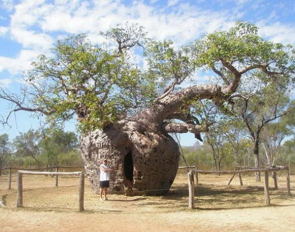 Dünyanın en ünlü ağaçları - Page 1