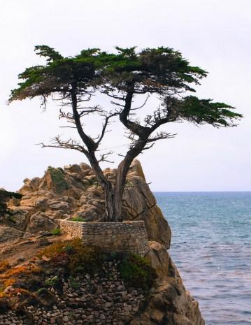 Dünyanın en ünlü ağaçları - Page 2