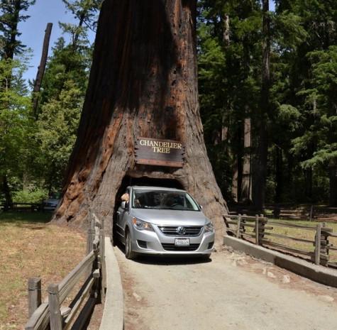 Dünyanın en ünlü ağaçları - Page 4