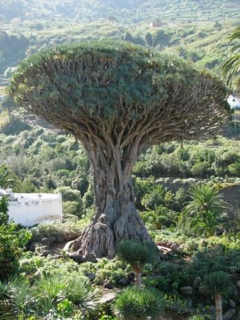 Dünyanın en ünlü yaşam alanı ağaçları - Page 1