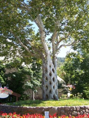 Dünyanın en ünlü yaşam alanı ağaçları - Page 2