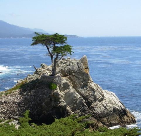 Dünyanın en ünlü yaşam alanı ağaçları - Page 4