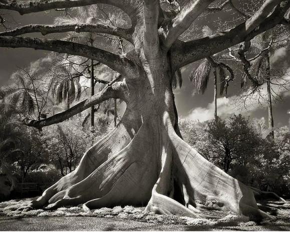 Dünyanın en yaşlı ağaçları sergisinden 20 muazzam fotoğraf - Page 2