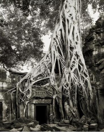 Dünyanın en yaşlı ağaçları sergisinden 20 muazzam fotoğraf - Page 3