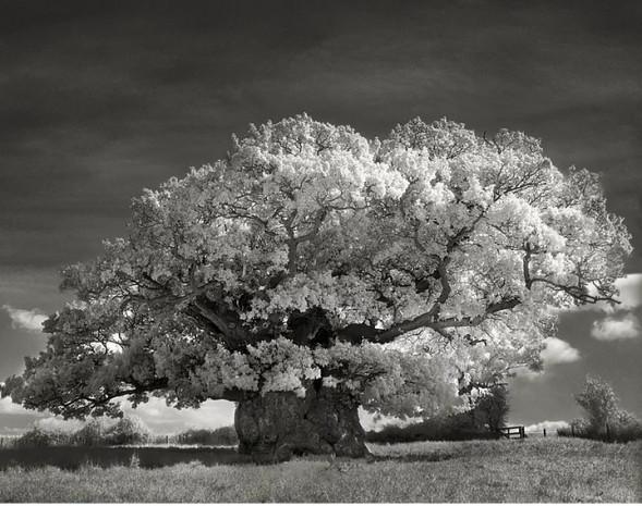 Dünyanın en yaşlı ağaçları sergisinden 20 muazzam fotoğraf - Page 4