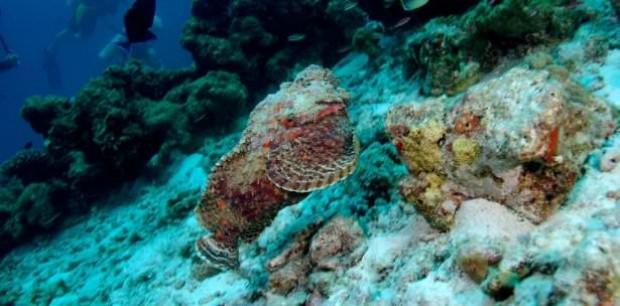 Dünyanın en zehirli beş hayvanından biri Taş balığı - Page 2