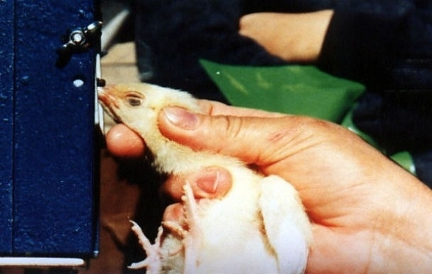 Dünyanın farklı bölgelerinden hayvanlara yapılan 18 yasal işkence - Page 2