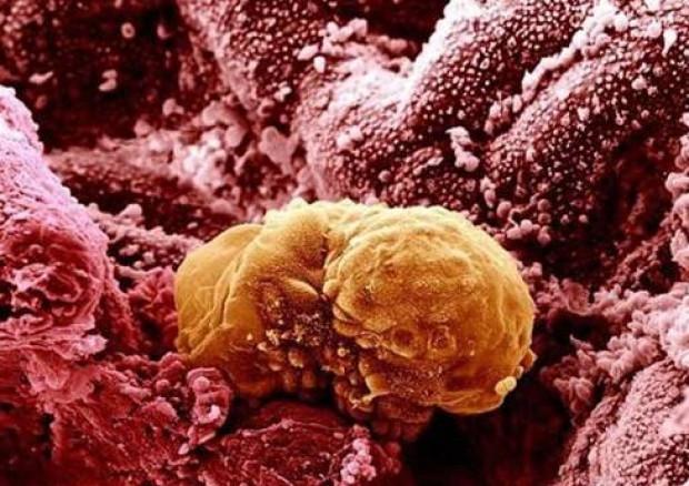 Elektron Mikroskopu ile vücudunuza bakın! - Page 2
