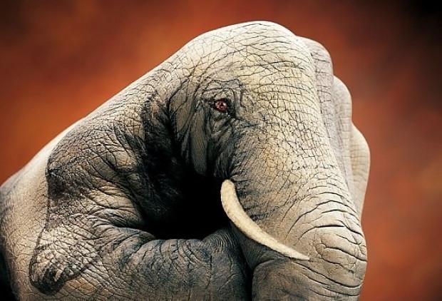 Ellerini harika sanatıyla hayvanlara dönüştürebilen sanatçının 11 görülmeye değer çalışması - Page 2