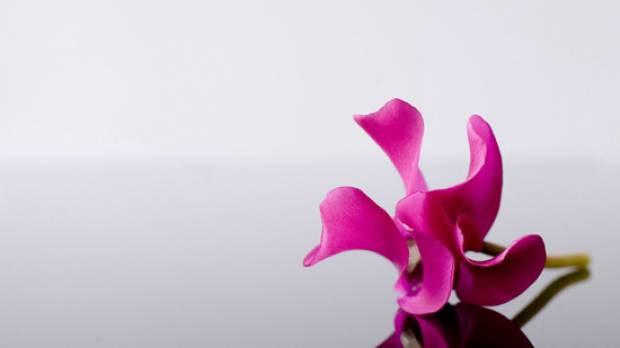 En güzel çiçek duvar kağıtları - Page 1