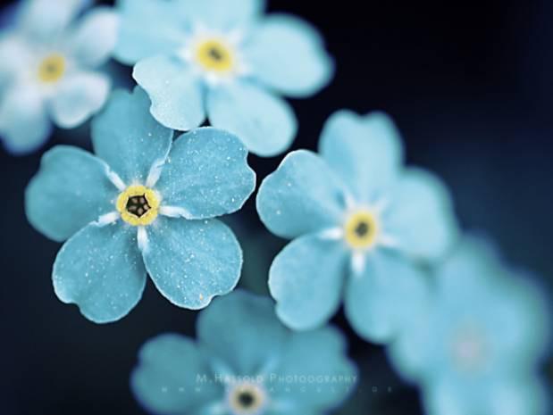 En güzel çiçek duvar kağıtları - Page 3
