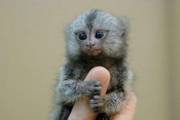 En küçük minyatür hayvanlar - Page 2