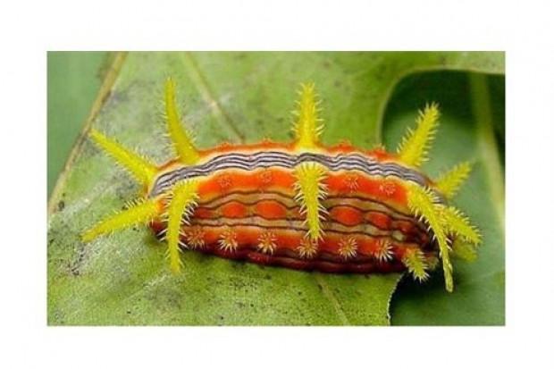 En tuhaf görünümlü böcekler - Page 2