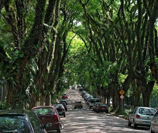 En ünlü ağaç tüneller - Page 2