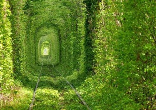 En ünlü ağaç tüneller - Page 4