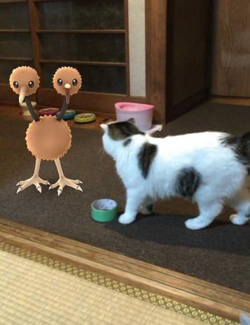Evcil hayvanlar Pokemon'ları görebiliyor - Page 1