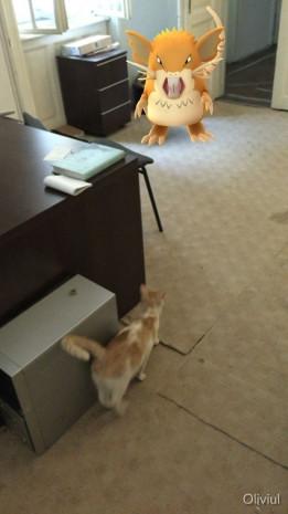 Evcil hayvanlar Pokemon'ları görebiliyor - Page 4