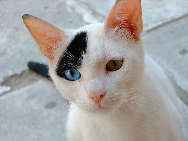 Genetik bozukluktan ötürü bir gözünün rengi diğerinden farklı olan 15 hayvan - Page 1