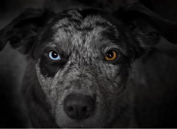 Genetik bozukluktan ötürü bir gözünün rengi diğerinden farklı olan 15 hayvan - Page 4