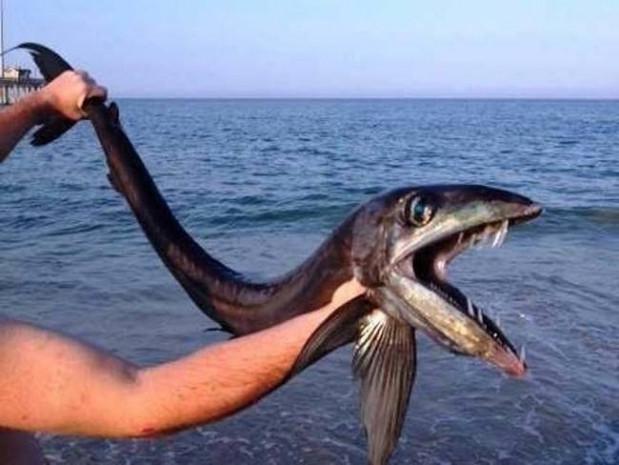 Gördükten sonra denize girmeye korkacağınız balık - Page 4