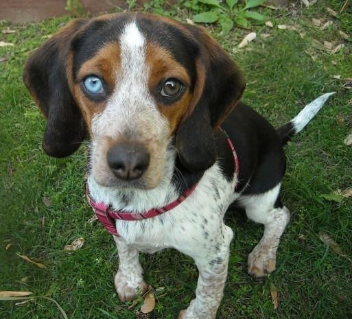 Gözleri birbirinden farklı renkte olan sevimlilikleri kat kat artmış 19 hayvan - Page 4