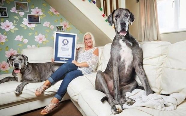 Guinness Dünya Rekorlar Kitabı 2018'den en ilginç olanlar - Page 3