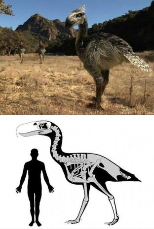 Günümüzde var olan 12 hayvan türünün milyonlarca yıl önce yaşamış dev ataları - Page 2